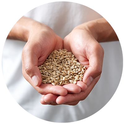 Sunflower Seeds ingredient being cradled in hands nothing artificial ever